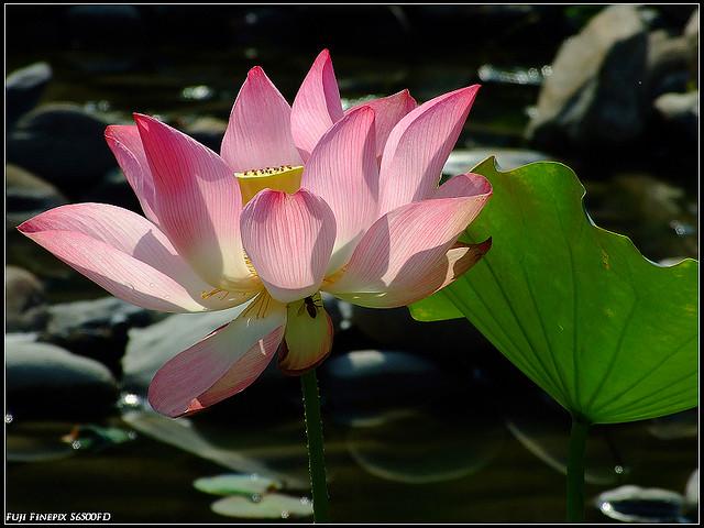 20090510 ~安平四季公園